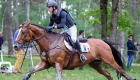 © Alleaume Gilles 2016. Saumur Complet CCI***. Cross-Country. SIROCCO DU GERS. Thomas CARLILE (FRA).